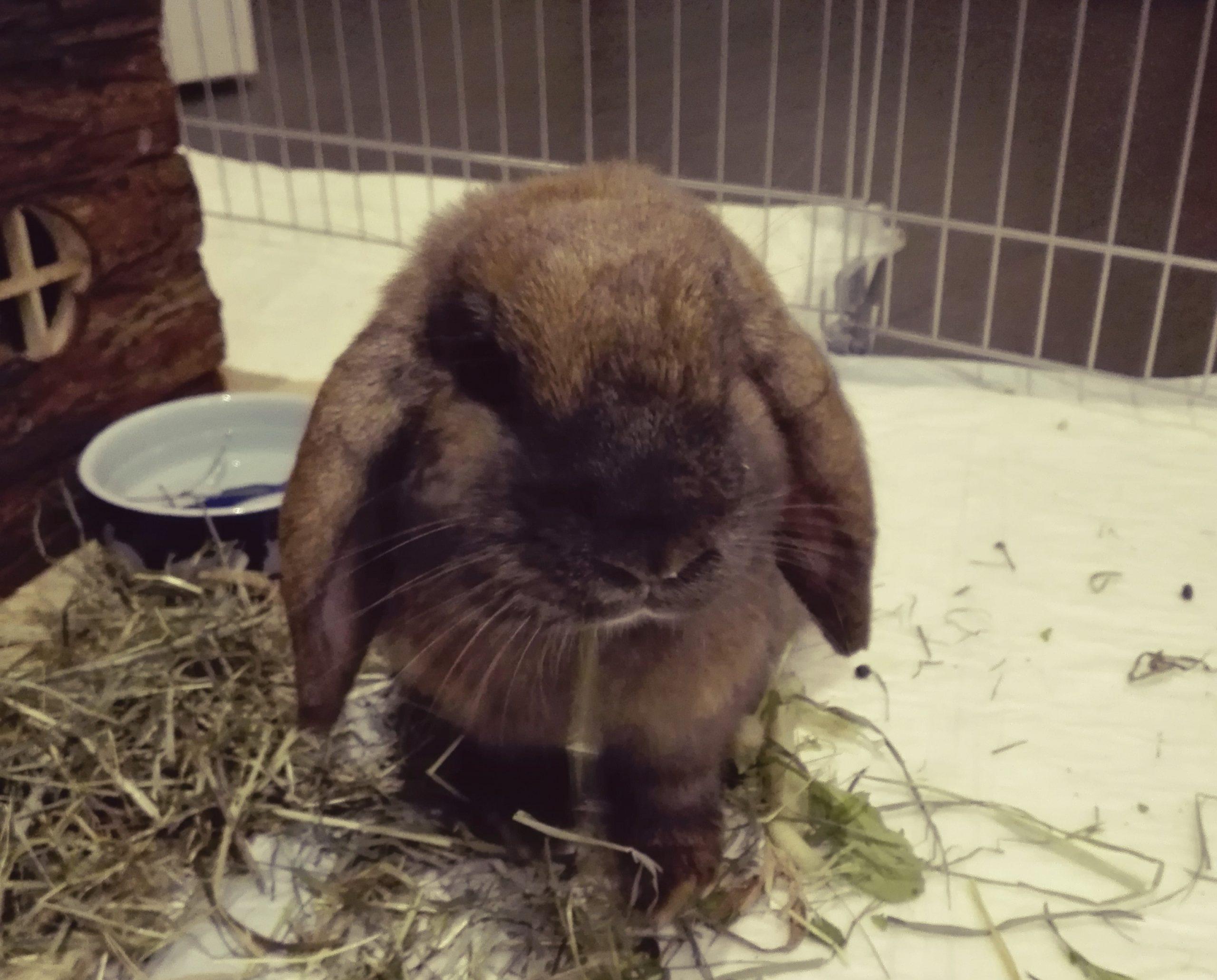 Il potere della Pet Therapy nell'elaborazione del lutto